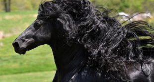 تصاویری جالب از زیبــــاترین اسب دنیا
