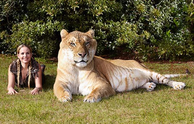 رکورد های جالب و دیدنی حیوانات در گینس +تصاویر