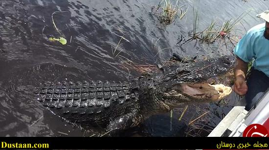 www.dustaan.com لحظه وحشتناک از حمله تمساح به قایق توریست ها +تصاویر