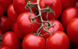 گوجه فرنگی های سمی بر سر سفره های مردم
