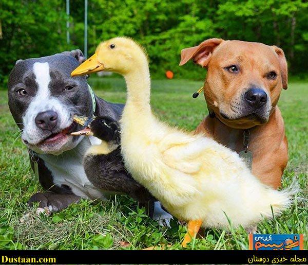 www.dustaan.com متفاوت ترین خانواده جهان! +تصاویر