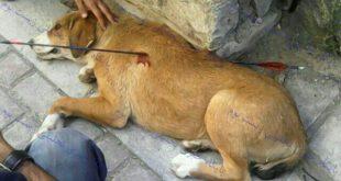 تصاویر سگ ازاری وحشیانه در مشهد +۱۶