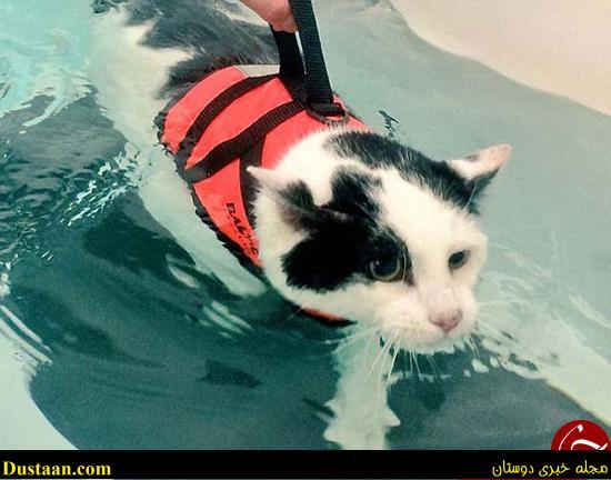www.dustaan.com تصاویر: گربه ای که با شنا کردن وزن کم می کند!