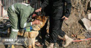 تصویر: تشکر مامور آتش نشانی از سگ زنده یاب