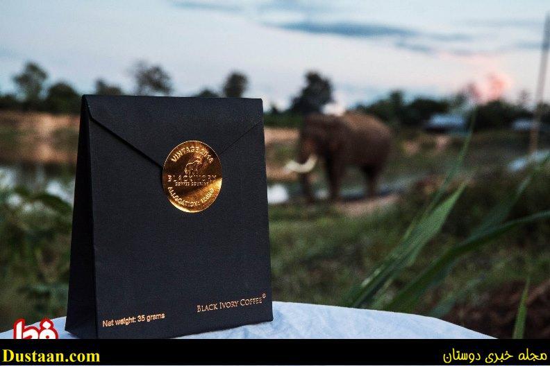 www.dustaan.com تهیه گران ترین قهوه دنیا با کمک مدفوع فیل!  +عکس