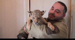 توله «شبر» بخاطر تغذیه از شیر بز سالم ماند! +تصاویر