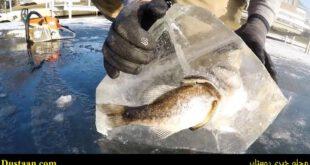 وقتی شکارچی و شکارش هر دو با هم یخ می زنند! +تصاویر
