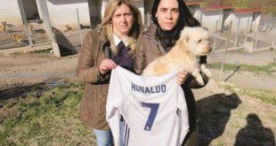 وقتی کریس رونالدو حامی سگ ها می شود! +عکس