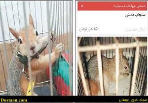 خرید و فروش غیرقانونی سنجابهای وحشی