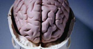 مغز انسان توانایی تولید قند مورد نیاز خود را دارد!