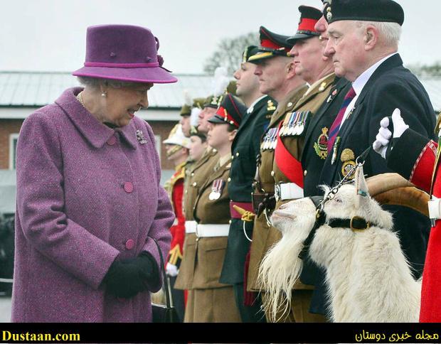 www.dustaan.com عکس: ملاقات ملکه انگلیس با بز سلطنتی!