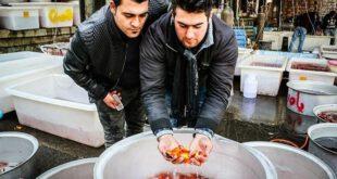 بازار فروش ماهی های قرمز +تصاویر