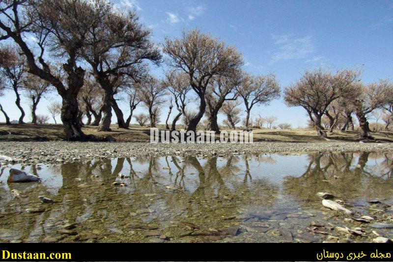 www.dustaan.com-dustaan.com-جنکل زیبای پدگان در سیستان و بلوچستان