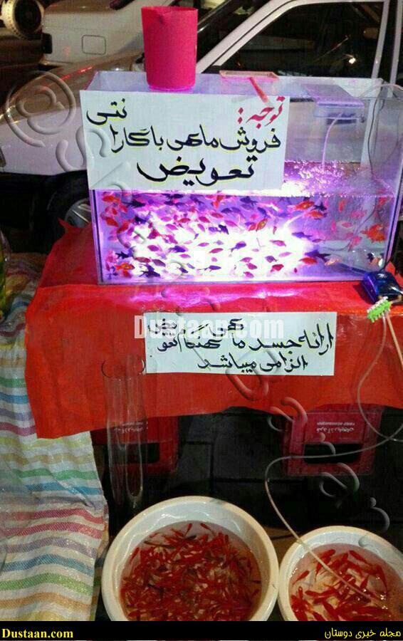 www.dustaan.com فروش ماهی عید با گارانتی تعویض! +عکس