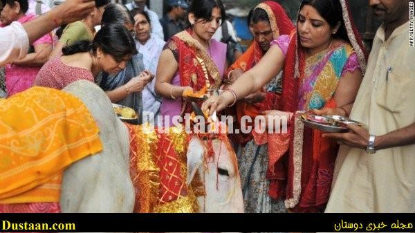 www.dustaan.com حبس ابد برای خوردن گوشت گاو در هند! +عکس