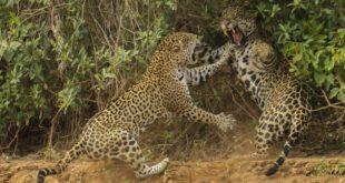 تصاویر برتر رقابت سالانه عکاسی حیات وحش