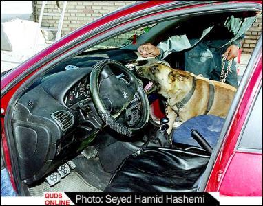 www.dustaan.com سگهای مواد یاب را بیشتر بشناسیم + عکس