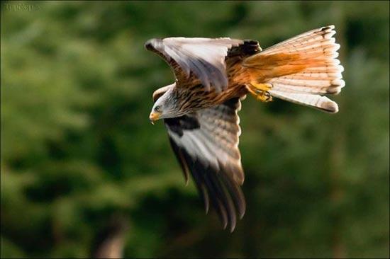 www.dustaan.com گزارش تصویری از ضایع شدن عقاب در برابر غاز عصبی!