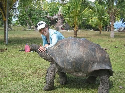 www.dustaan.com تصاویری جالب از بزرگترین گونه های لاک پشت بر روی کره زمین!