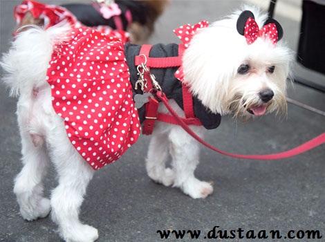 www.dustaan.com جشنواره سگ های زیبا و تزئینی در ریو دو ژانیرو برزیل