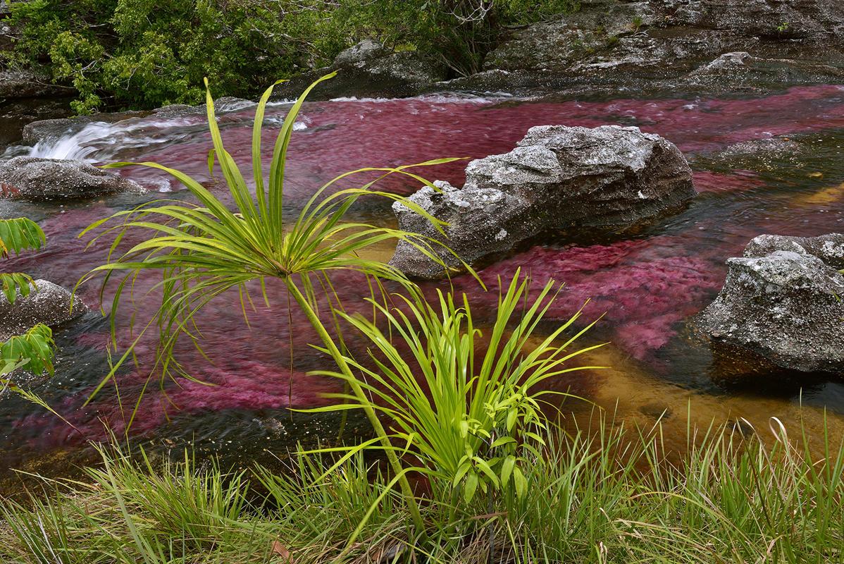 www.dustaan.com تصاویری فوق العاده زیبا از رودخانه 5 رنگ در کلمبیا با کیفیت بالا