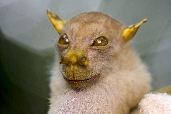 www.dustaan.com تصاویری زیبا از حیواناتی کمیاب و نادر!