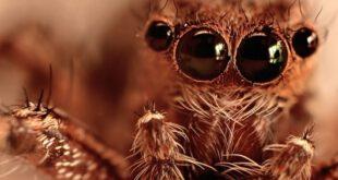 11 تصویر فوق العاده زیبا و دیدنی از عنکبوت ها