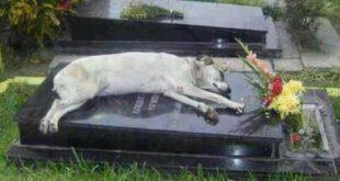 سگی که 8 سال هست در کنار قبر صاحبش می خوابد! +عکس