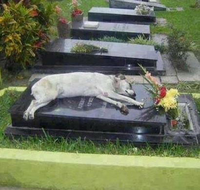 www.dustaan.com سگی که 8 سال هست در کنار قبر صاحبش می خوابد! +عکس