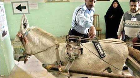 www.dustaan.com عکس/ بازرسی بدنی یک «خر» در پاکستان!