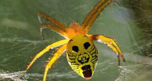 این حشرات شباهت فوق العاده عجیبی به انسان دارند +تصاویر