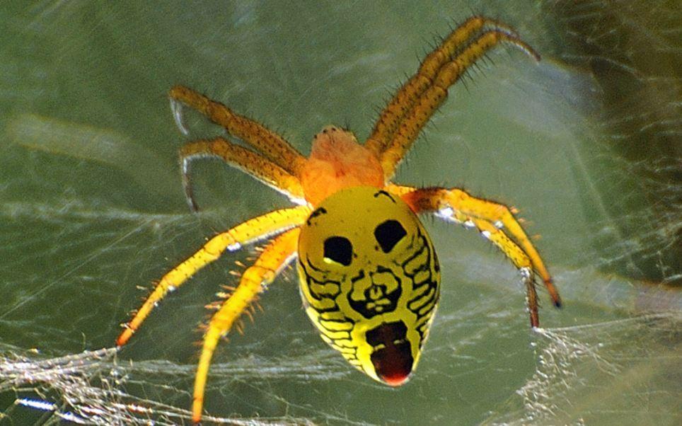www.dustaan.com این حشرات حامل ۱۵۰۰ ویروس خطرناک هستند!