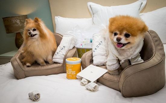 www.dustaan.com عکس/ خوشبخت ترین سگ دنیا که 5 میلیون لایک گرفته!!