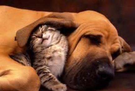 www.dustaan.com سگی که سه قلو گربه زایید!