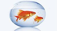 www.dustaan.com ماهی قرمز را در سفره هفت سین خود نگذارید!