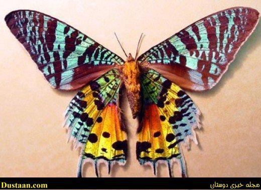 www.dustaan.com معرفی ۱۰ حیوان فوق العاده زیبای جهان! +تصاویر