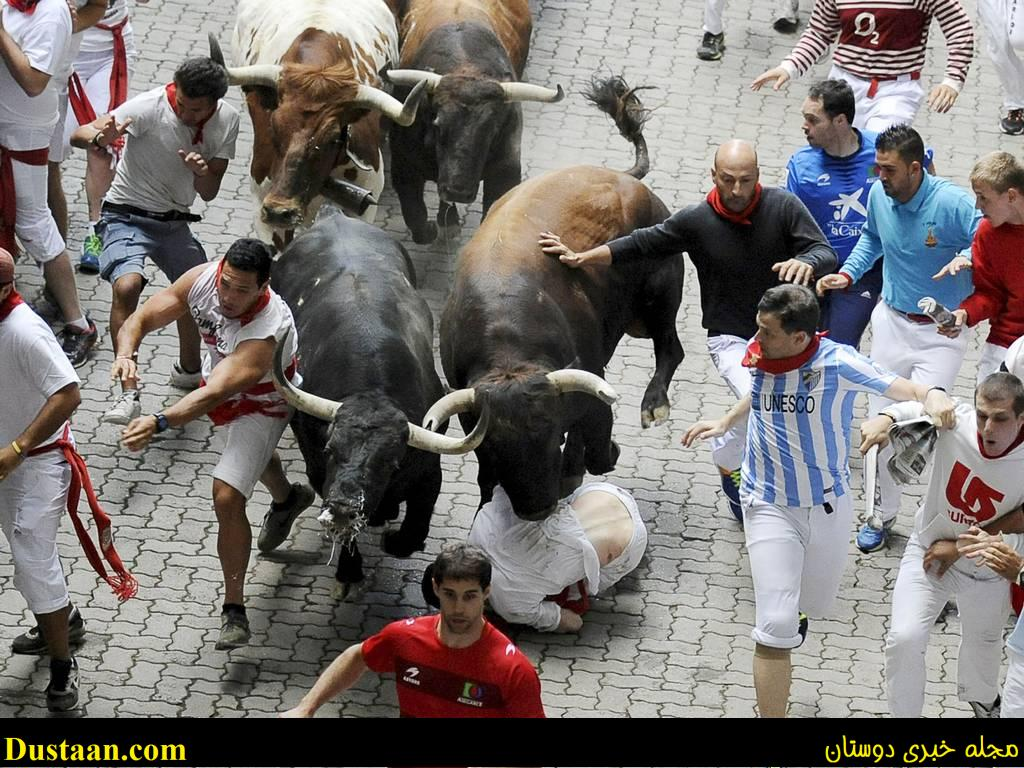 www.dustaan.com تظاهرات دختران برهنه در اسپانیا برای اعتراض به گاو بازی! + تصاویر
