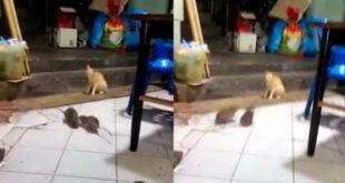 ترس شدید گربه از دعوای دو موش! +عکس و فیلم