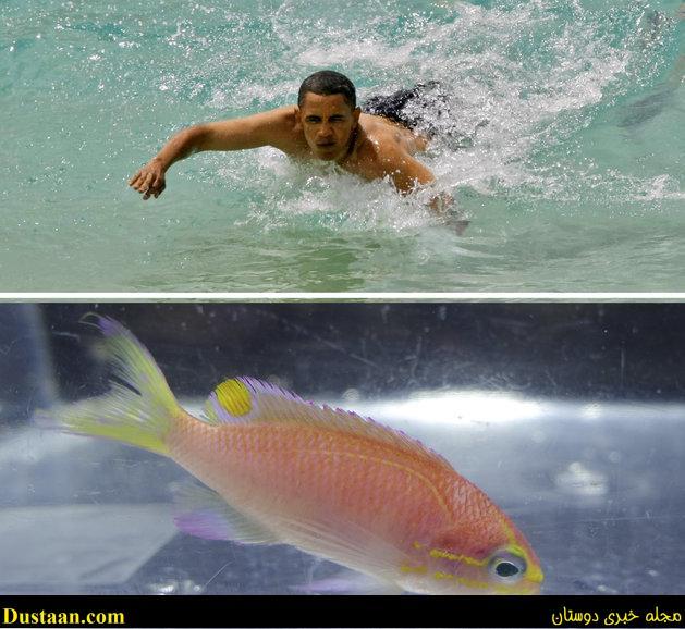 www.dustaan.com این ماهی اوباما نام دارد! +عکس
