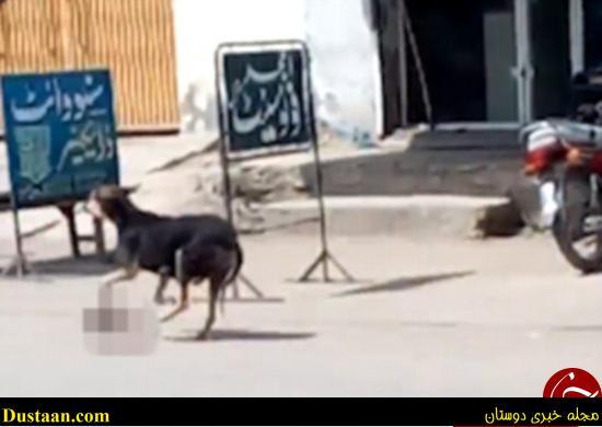 سگی که جنازه بچهای را در دهان گرفته بود +تصاویر