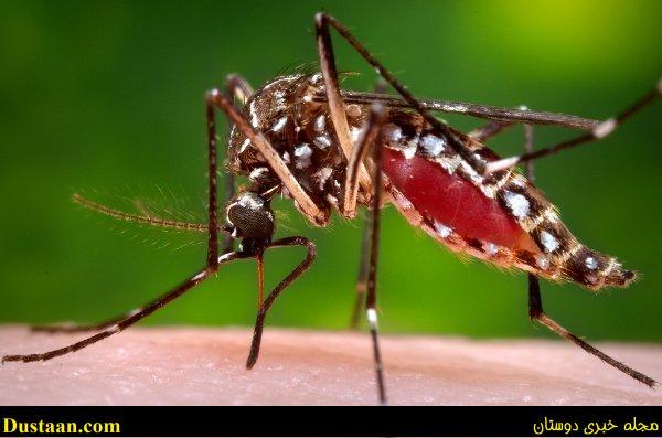 www.dustaan.com انتقال ویروس «زیکا» از طریق اشک چشم و عرق بدن