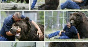 رابطه دوستانه با خرس 800 کیلوگرمی