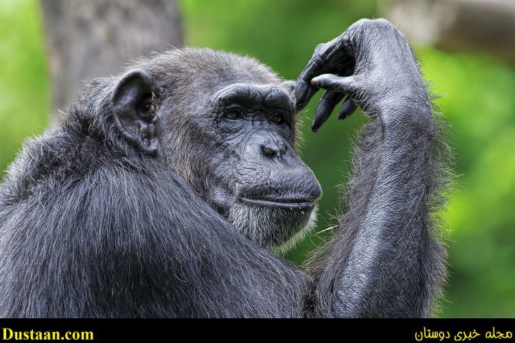 باهوش ترین حیوانات جهان را می شناسید؟! +تصاویر