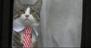 گربه باکلاس آسانژ سوژه عکاسان خبری!