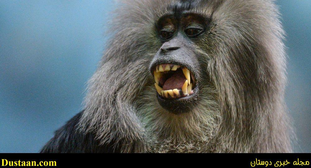 میمونی که منجر به درگیری های مسلحانه سنگین در لیبی شد