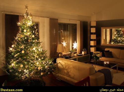 www.dustaan.com سالانه ۴۰۰۰ درخت کاج برای کریسمس وارد کشور میشود!