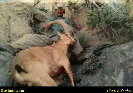www.dustaan.com تصویری که شکارچی بزکوهی را به دام انداخت!