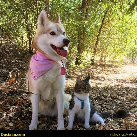 www.dustaan.com ماجرای گربه ای که خود را یک سگ شجاع می داند!