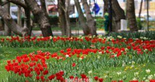 جشنواره گل های پیازی در مشهد/تصاویر