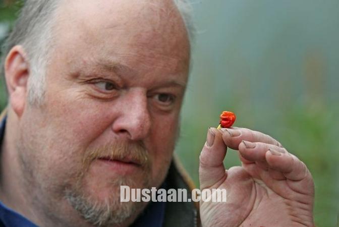 www.dustaan.com فلفلی بسیار عجیب که انسان را می کُشد! +تصاویر